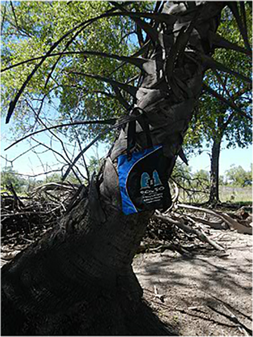 Bag seeking shelter from the midday sun. Tsumeb district, Namibia,  January 2013.