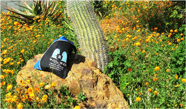 Bag getting acquainted with a cactus in Van Rhynsdorp, August 2015.