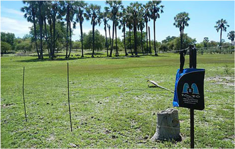 Bag admiring the indigenous Makalani palms in the Tsumeb district  of Namibia, January 2013.