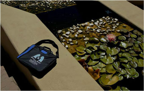 Bag admiring water lily. Ernie Els Wines,  14 March 2014.