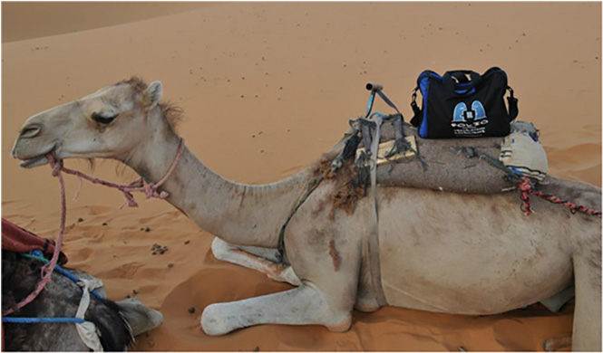 Bag hitching a ride with Yasmina in the Sahara desert, Morocco, July 2014.