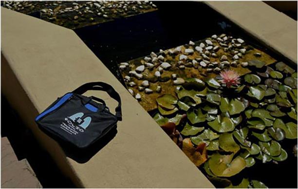 Bag admiring water lily. Ernie Els Wines, 14 March 2014.