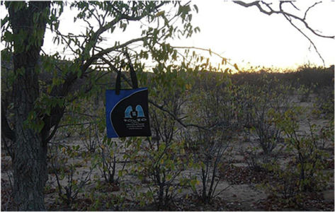 Bag hanging out in some mopane trees,  Namibia, June 2013.