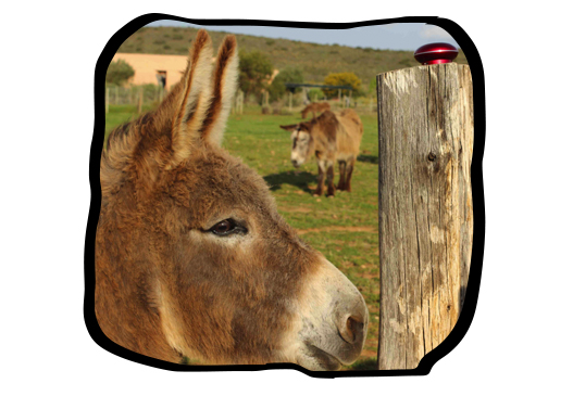 KitKat, Folio's adopted donkey, at Eseltjiesrus Donkey Sanctuary in McGregor.